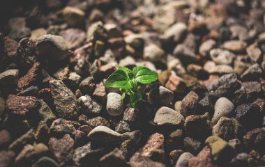 בעיה קטנה – עיכוב גדול